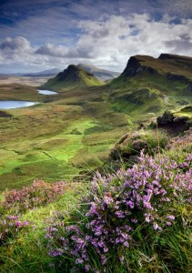 scotland, heather, skye